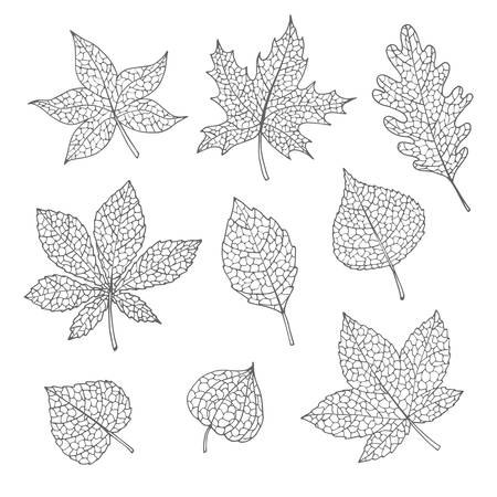 Ensemble d'automne vectoriel dessiné à la main avec des feuilles de chêne, de peuplier, de hêtre, d'érable, de tremble et de marronnier d'Inde et un contour gris physalis isolé sur fond blanc. Dessin au trait détaillé du feuillage pour votre conception. Vecteurs