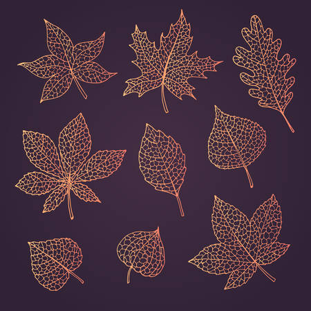 Hand drawn vector autumn set with oak, poplar, beech, maple, aspen and horse chestnut leaves and physalis of orange gradient colors isolated on the dark background. Detailed foliage line art. Fall elements collection.