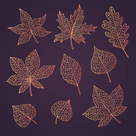 Otoño de vector dibujado a mano con hojas de roble, álamo, haya, arce, álamo temblón y castaño de indias y physalis de colores degradados naranjas aislados en el fondo oscuro. Arte de línea de follaje detallado. Colección de elementos de otoño.