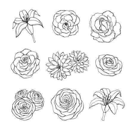 Vektor handgezeichnete Reihe von Rosen-, Lilien-, Pfingstrosen- und Chrysanthemenblumenkonturen, die auf dem weißen Hintergrund lokalisiert werden. Vintage florale Elemente für Ihr Design.