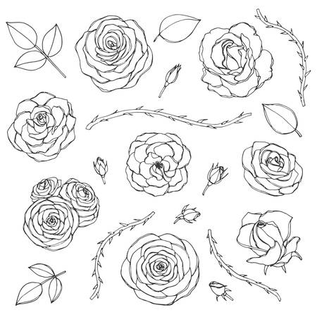 Vector hand drawn set of rose flowers with buds, leaves and thorny stems line art isolated on the white background. Floral collection of blossoms in sketchy style. Vector Illustratie