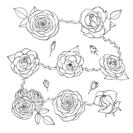 Vector set of rose flowers with buds, leaves and thorny stems line art isolated on the white background. Hand drawn floral collection of blossoms in sketchy style.
