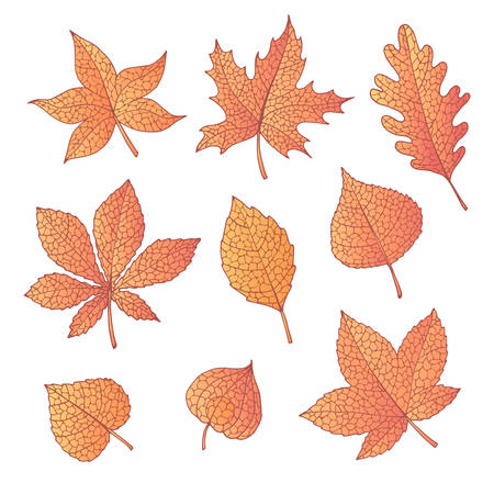 Hand drawn vector autumn set with oak, poplar, beech, maple, aspen and horse chestnut leaves and physalis of orange color isolated on the white background. Detailed foliage. Fall elements for you design.