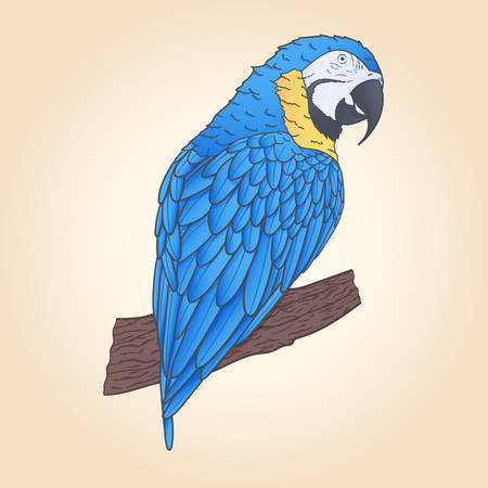 Hand drawn vector macaw parrot sitting on the branch isolated. Tropical decoration.