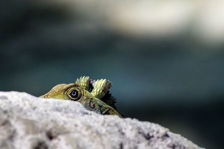 peep: Lizard Eye