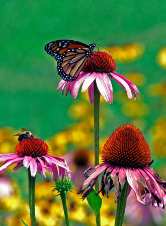 Butterfly and flowers on a summer day photo