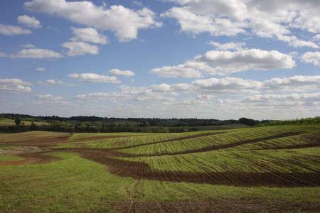Winding pathways through a field