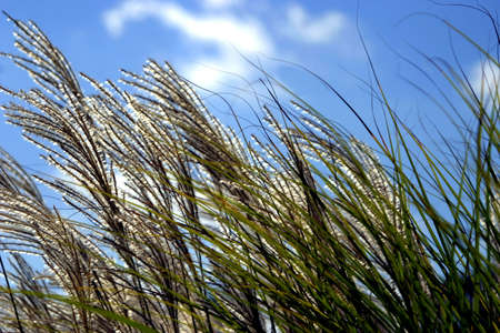 Grasses in a Breeze Imagens