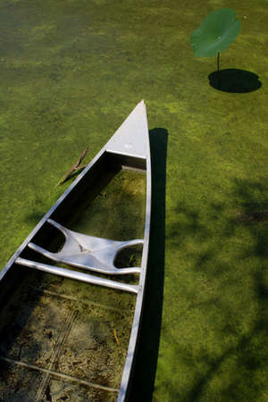 Canoe in algea filled pond with water lily Imagens