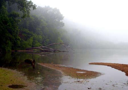 Foggy Lake Imagens