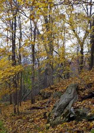 hillside: Autumn Hillside
