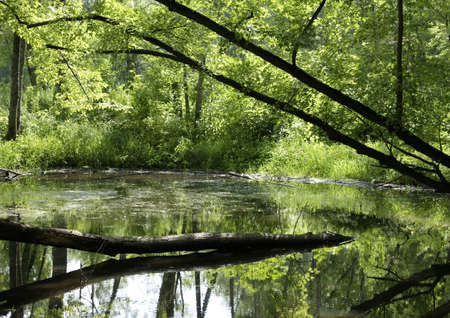 Green reflections in a  pond
