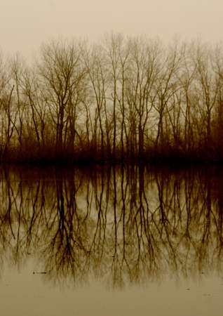 Misty reflections of trees on water