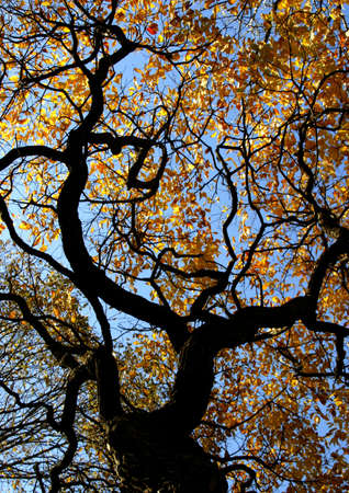 Twisted branches and fall leaves