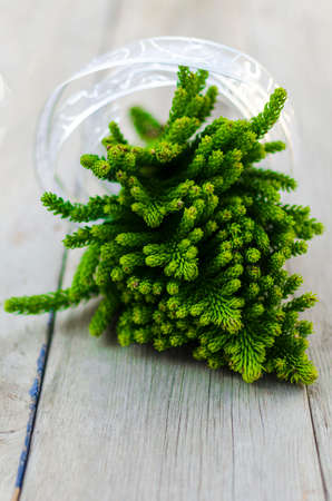 Bunch of Araucaria branches with silver ribbon photo