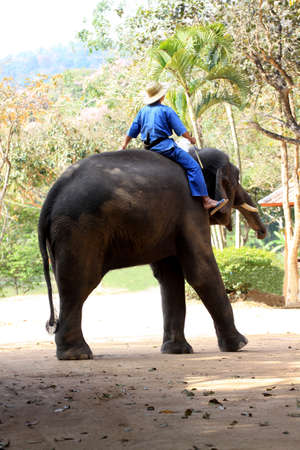 Mahout and elephan at Lampang province 02