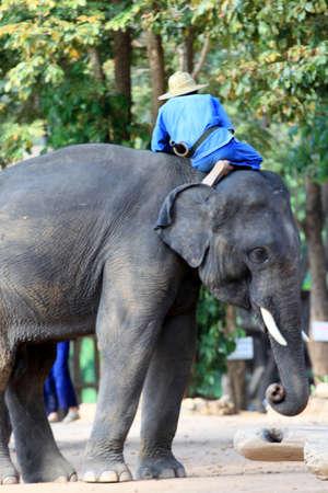 Mahout et elephan à la province de Lampang 03