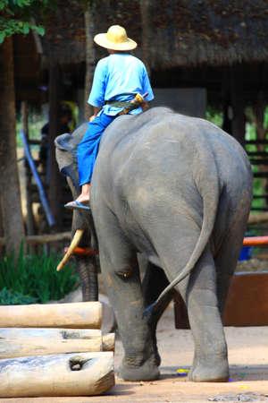 Mahout and elephan at Lampang province 04 photo