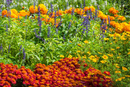 colorful flowers in the garden, flower garden background photo