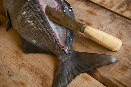 coldblooded: Fresh fish from the sea on wooden background, Healthy foods background.