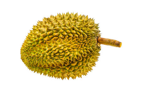 dint: Durian fruit isolated on white background, Fresh fruit from orchard, King of fruit from Thailand, Many people like this fruit but some people dint like because so smell. Stock Photo