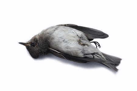 dead bird background in nature, isolated dead bird on white. 스톡 콘텐츠