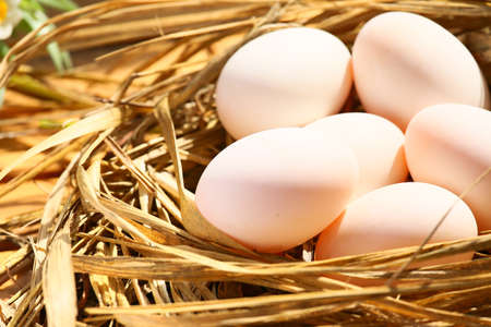 raw material: eggs in nest on the nature, Fresh eggs for cooking or raw material, fresh eggs background.