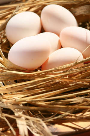 meterial: eggs in nest on the nature, Fresh eggs for cooking or raw material, fresh eggs background.