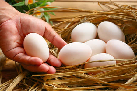 materia prima: eggs in nest on the nature, Fresh eggs for cooking or raw material, fresh eggs background.