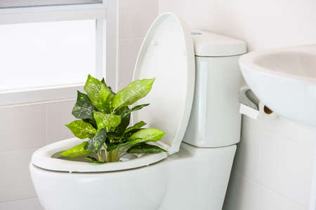 interior desing: white toilet in modern home, white toilet bowl in cleaning room, flushing liquid in toilet, private toilet in modern room, interior equipment and modern restroom, cleaning toilet.