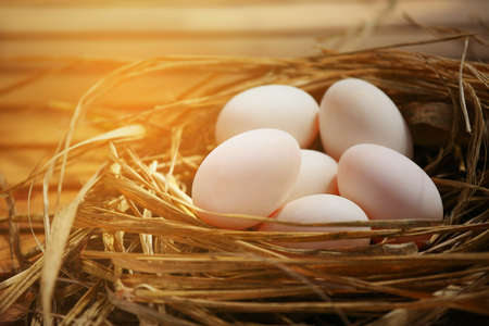 meterial: Fresh eggs on wooden background from farm and prepare for cook in kitchen room. Organic food and clean food for healthy, Eggs from farm to the market for raw material to cooking by chef in restaurant.
