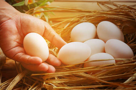 Fresh eggs on wooden background from farm and prepare for cook in kitchen room. Organic food and clean food for healthy, Eggs from farm to the market for raw material to cooking by chef in restaurant.
