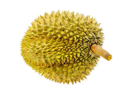 Durian from orchard for export to the market or supermarket. King of fruit is durian and so smell. some people favorite durian some people unfavorite due to smell. high sugar and calorie.
