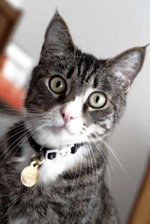 Cat Stok Fotoğraf - 5395291