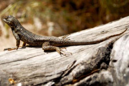 Lizard Stok Fotoğraf - 5395289