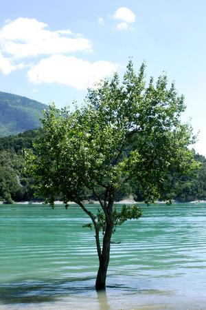 Tree in the water Stock fotó