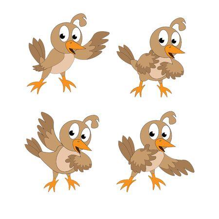 Illustration design of cute quail birds