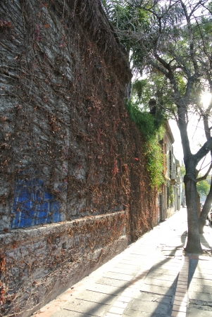 Huge vine wall at sunset Stock Photo - 21641484