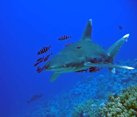 shark Stock Photo - 602379