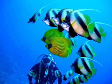 aqualung: Subacqueo  Archivio Fotografico