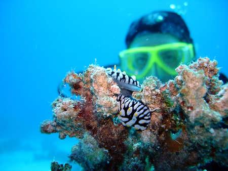 padi:     diver Stock Photo