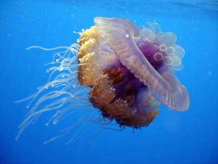 jelefish Stock Photo - 603542