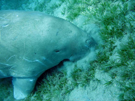 manatee Stock Photo - 1051605