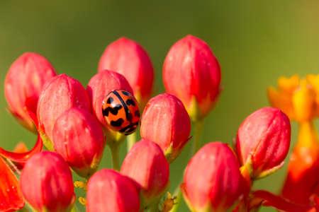 Ladybug on flower photo
