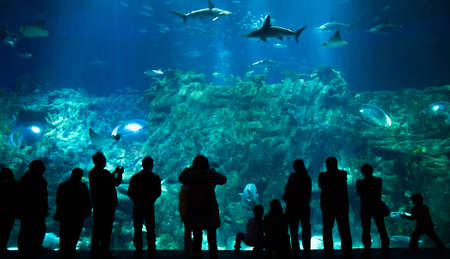 Tourists in Aquarium photo