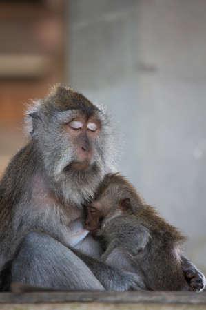 b�b� singe: Baby Monkey
