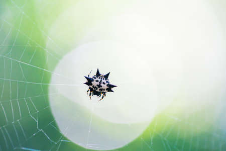 Little devil Spider on the web photo