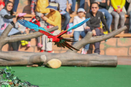 amusment: A Macaw Flying as a performance