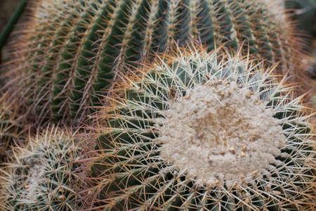 full metal jacket: Cactus Stock Photo