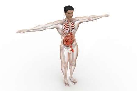 midsagittal: human anatomy Stock Photo